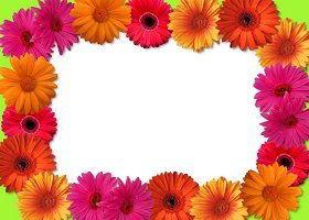 Free Printable Gerber Daisy Card And Invitation