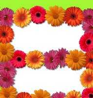<h3>Gerber Daisy Candy Wrapper </h3>